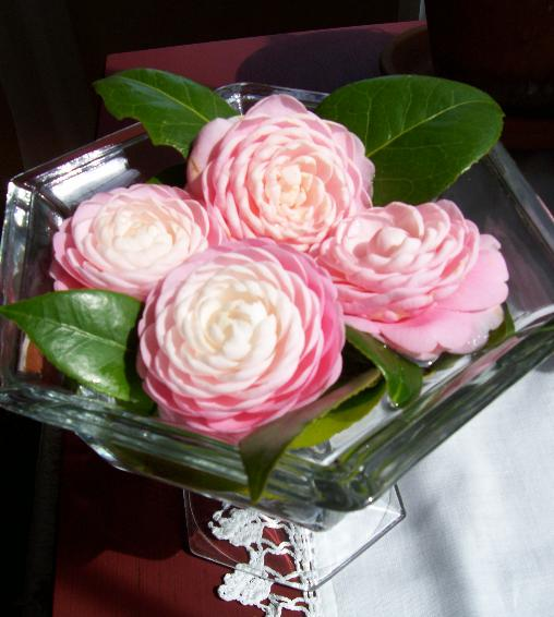 Camellias in Bowl
