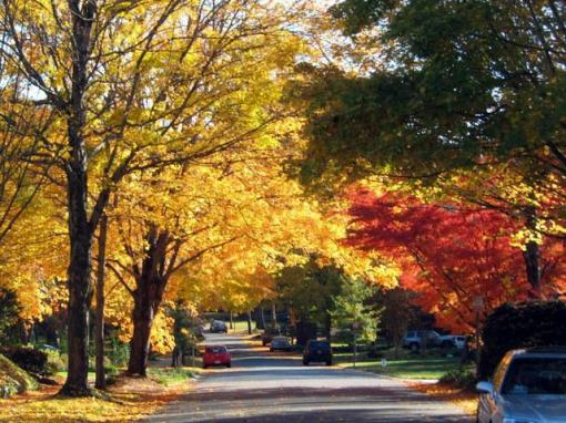 Fall in Charlotte (something to look forward to) Pic from http://www.activerain.com