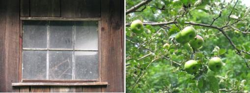 Six Pane Window and Ripening Apples www.sweeticedtea.wordpress.com pictures