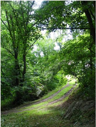 www.sweeticedtea.wordpress.com pictures