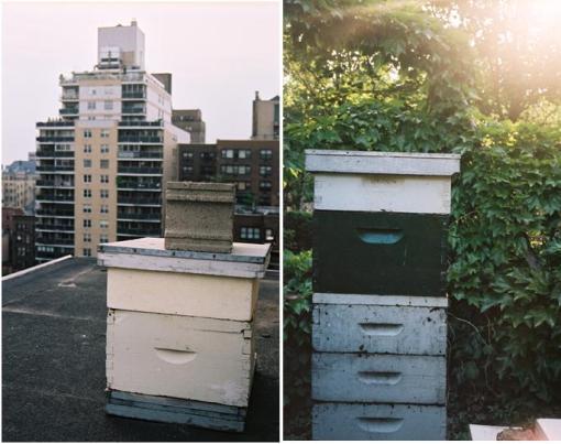 Erin's Bees 1