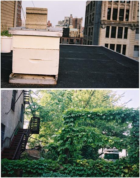 Erin's Bees 2