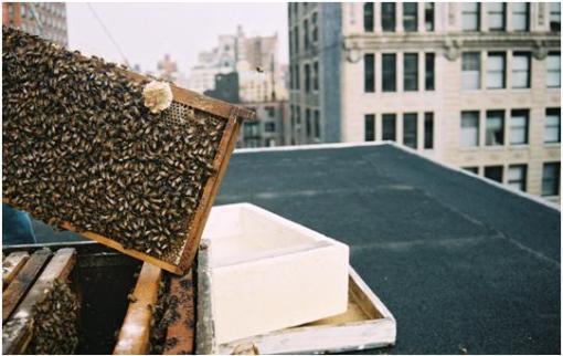 Erin's Bees 3